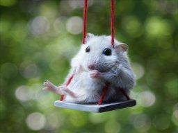 _Hamster_Boy_